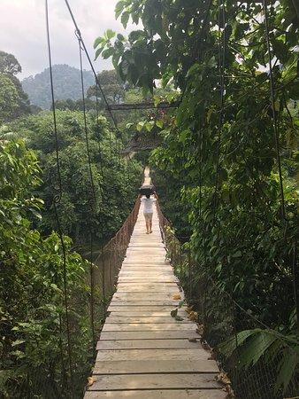 Национальный парк Гунунг-Лесер, Индонезия: Rope bridge to the hotel