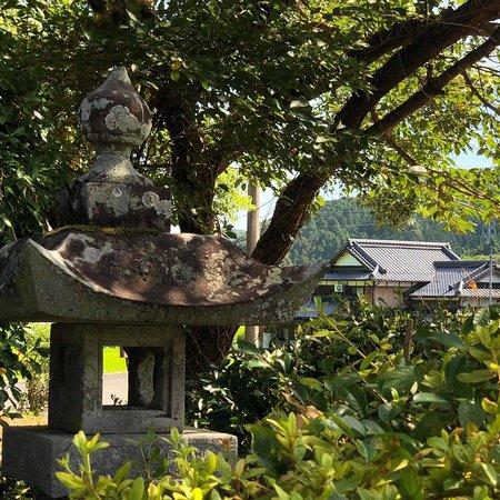 Chikujo-machi, ญี่ปุ่น: 本庄の大楠