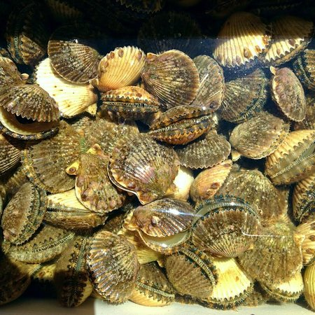 Saint Marks, FL: Scallop season success!