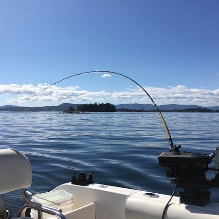 Cobble Hill, Canadá: Great day fishing with Mark and Charmer Point Charters! Chinook & spot prawns!!