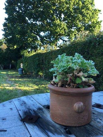 Edenbridge, UK: Garden