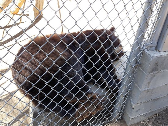 Big Bear Alpine Zoo at Moonridge: 20180924_134525_large.jpg