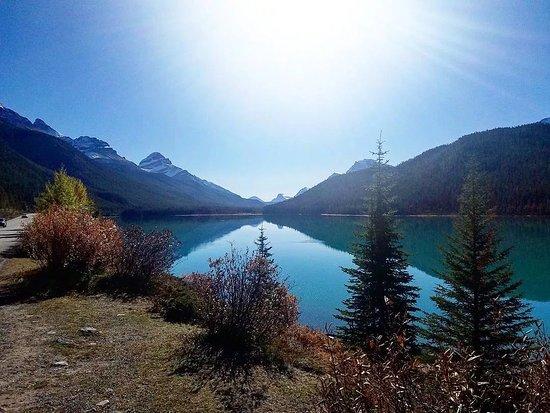 Waterfowl Lake Campground: Waterfowl Lake