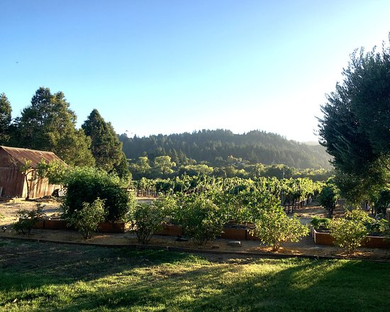 Zo Wines: View from the back porch