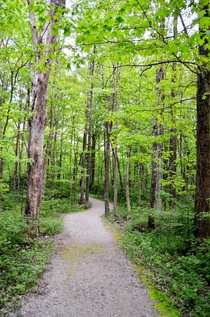 Gallant Woods Preserve