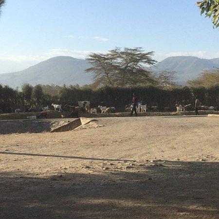 Maai Mahiu, Kenya: photo0.jpg