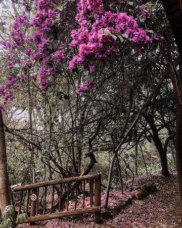 Schoemanskloof, แอฟริกาใต้: Walk ways are through beautiful natural gardens.