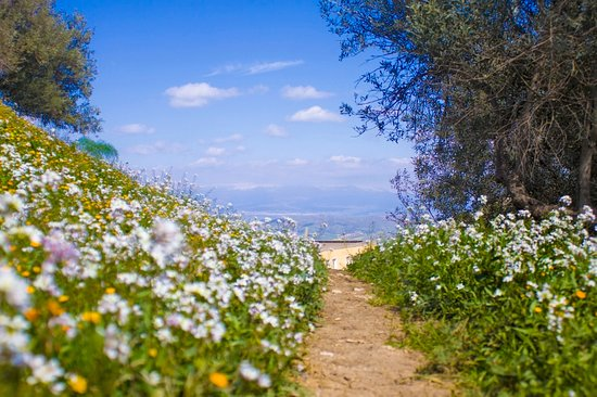 Castel di Judica, อิตาลี: La primavera