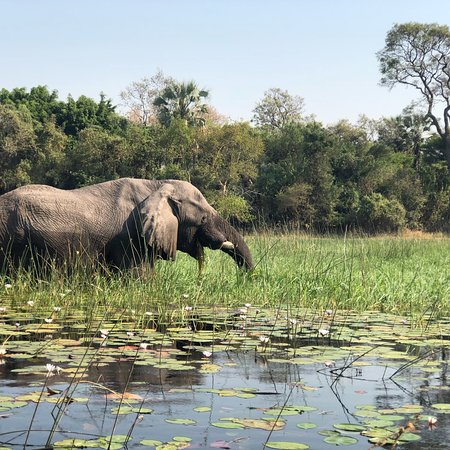 Okavango Delta Photo
