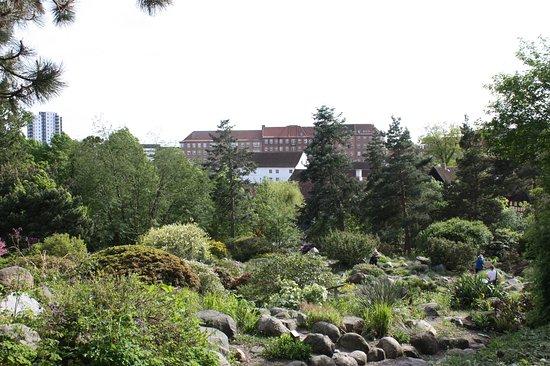 Aarhus Botanisk Have Botanical Garden Billede Af Botanisk Have