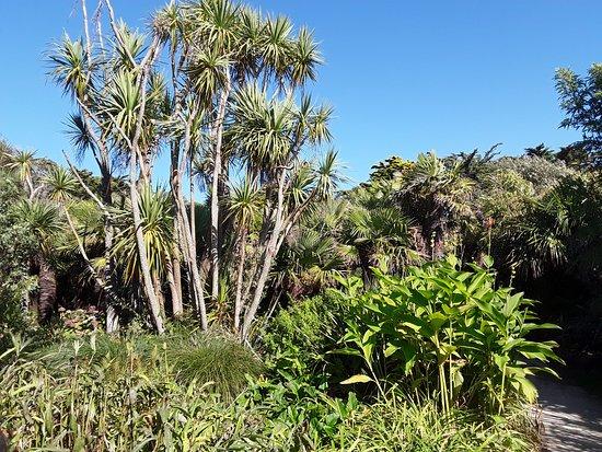 Vauville, Frankreich: Magnifiques yuccas