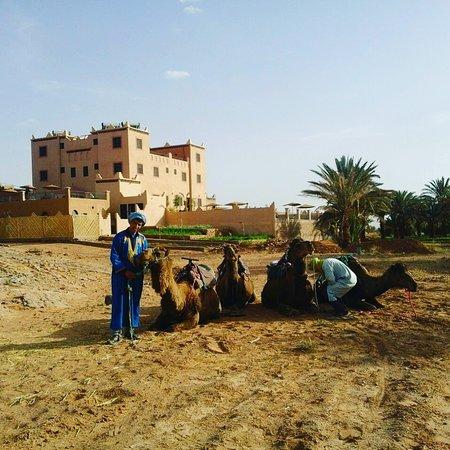 Tafraoute Sidi Ali, Marrocos: Randonnée chamelière dans la palmeraie