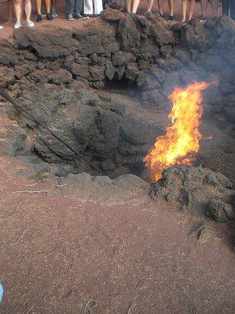 Timanfaya National Park: Fire Pit Demo