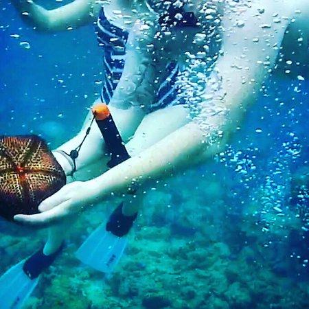 Underwater wild life in fodhdhoo , Maldives