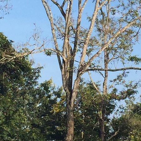 Kabini Wildlife Safari - Day Tour: photo1.jpg