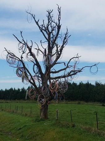 Anamosa, IA: Hula Hoop Tree