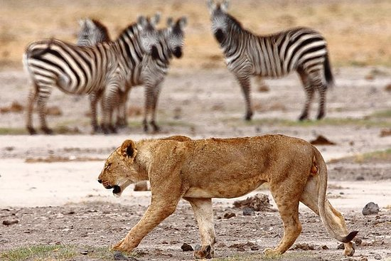 6 TageTsavo - Amboseli - Lake Nakuru...