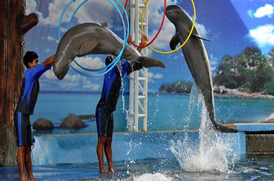Pattaya Dolphin World Eintrittskarte
