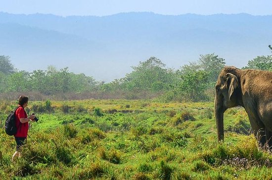 3 dagar Chitwan Wildlife Safari Tour!
