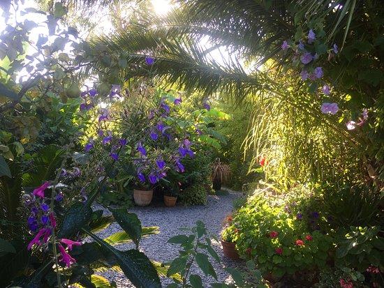 Cannas et hibiscus - Picture of Les Jardins de la Boirie, Ile d ...