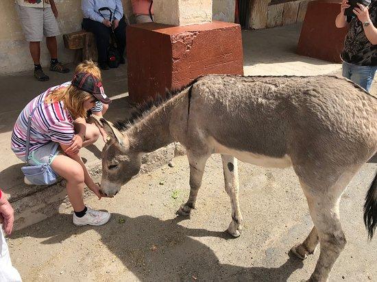 Desert Wonder Tours & Trips: Feeding the Wildlife :D