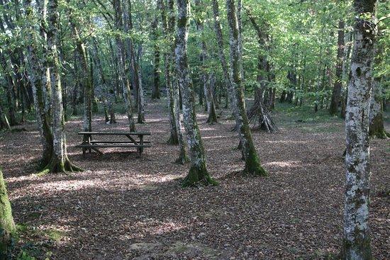 Hautecourt-Romaneche, Франция: L'ancien parcours aventure du bois du devin