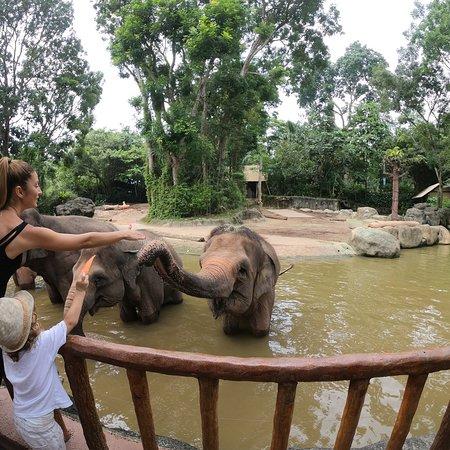 Singapore Zoo: photo1.jpg