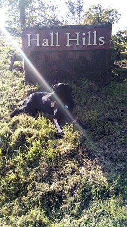 Dalston, UK: Nayvee finds a rare warm sun ray