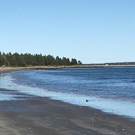 Petite Riviere, Canada: photo2.jpg