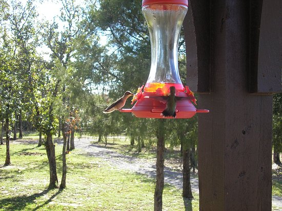 Cookson, Οκλαχόμα: Hummingbird feeders at every cabin