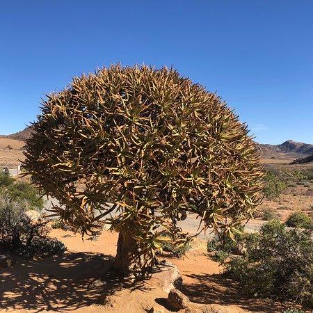Springbok, Νότια Αφρική: photo4.jpg