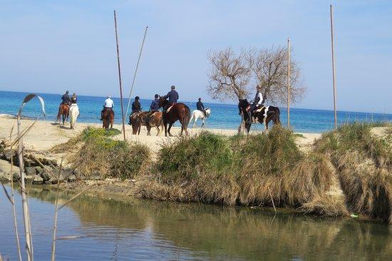 Montalbano, Itália: Parco Regionale delle Dune Costiere, zona umida di Lido Morelli