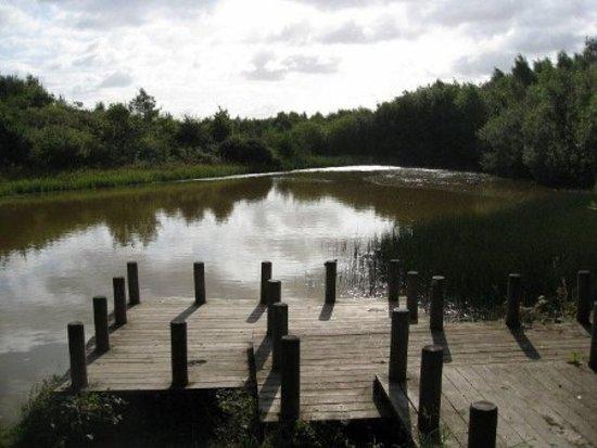 Newbold Coleorton, UK: The largest lake at New Lount Nature Reserve.