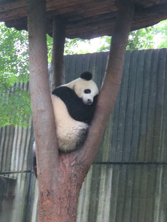 Private Chengdu Day Tour: Giant Pandas and the Jinsha Site Museum: Street food in the broad and narrow alleys