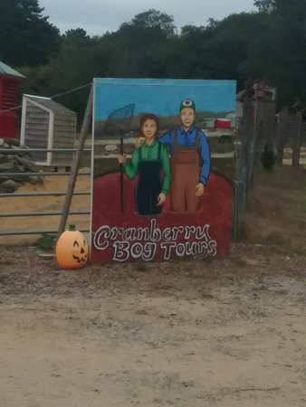 Cranberry Bog Tours Photo