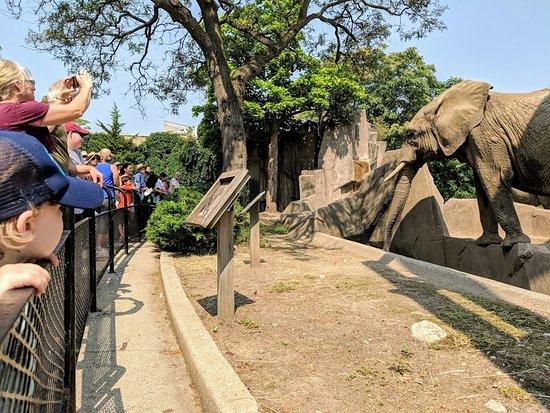 Milwaukee County Zoo: Amazing Elephants