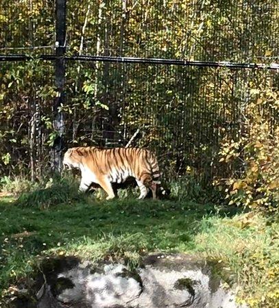 アラスカ動物園 - Foto de Alaska Zoo, Anchorage - TripAdvisor