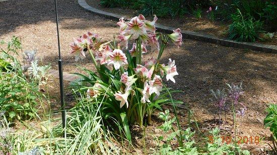Swan Lake Iris Gardens: Flower garden section.