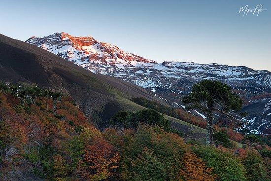 Araucania Region, Chili: Paisaje y Volcan Tolhuaca en reserva Nacional Las Nalcas junto a Ecophoto.