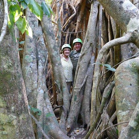 Rainforest route