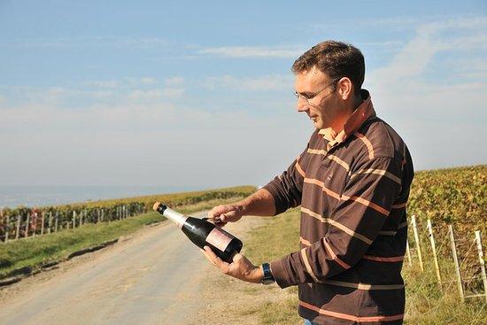 3-timers Champagne Region Vineyard...
