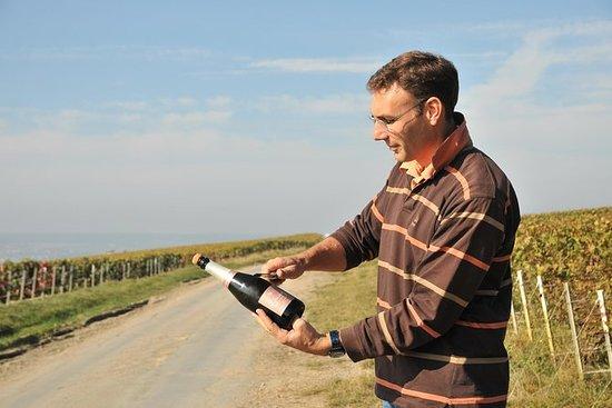 Smågruppe Champagne Region Vineyard...
