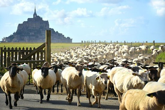 Privéwandeling door Mont-St-Michel en ...