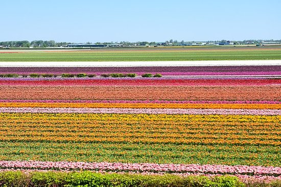 Keukenhof and Flowerfields, Volendam...