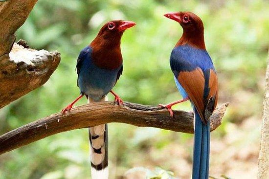 Spedizione di birdwatching e ciclismo