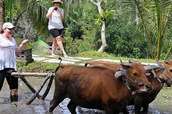 Bali Ubud Rice Terraces, Temples...