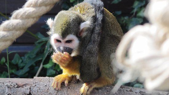 Monkey Haven: Aren't I cute (Macaque)