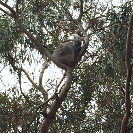 Hanson Bay, Australië: photo5.jpg