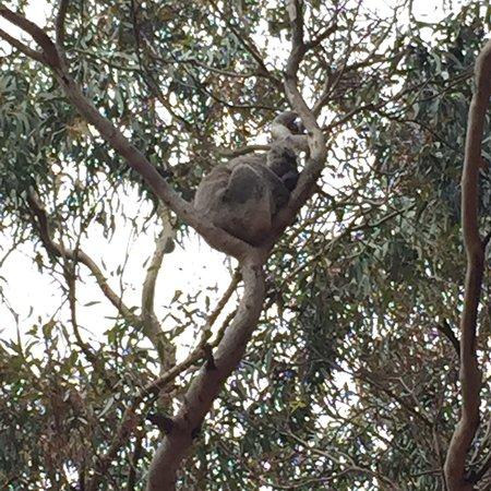 Hanson Bay, Australië: photo6.jpg