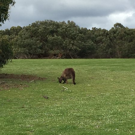 Hanson Bay, Australië: photo9.jpg